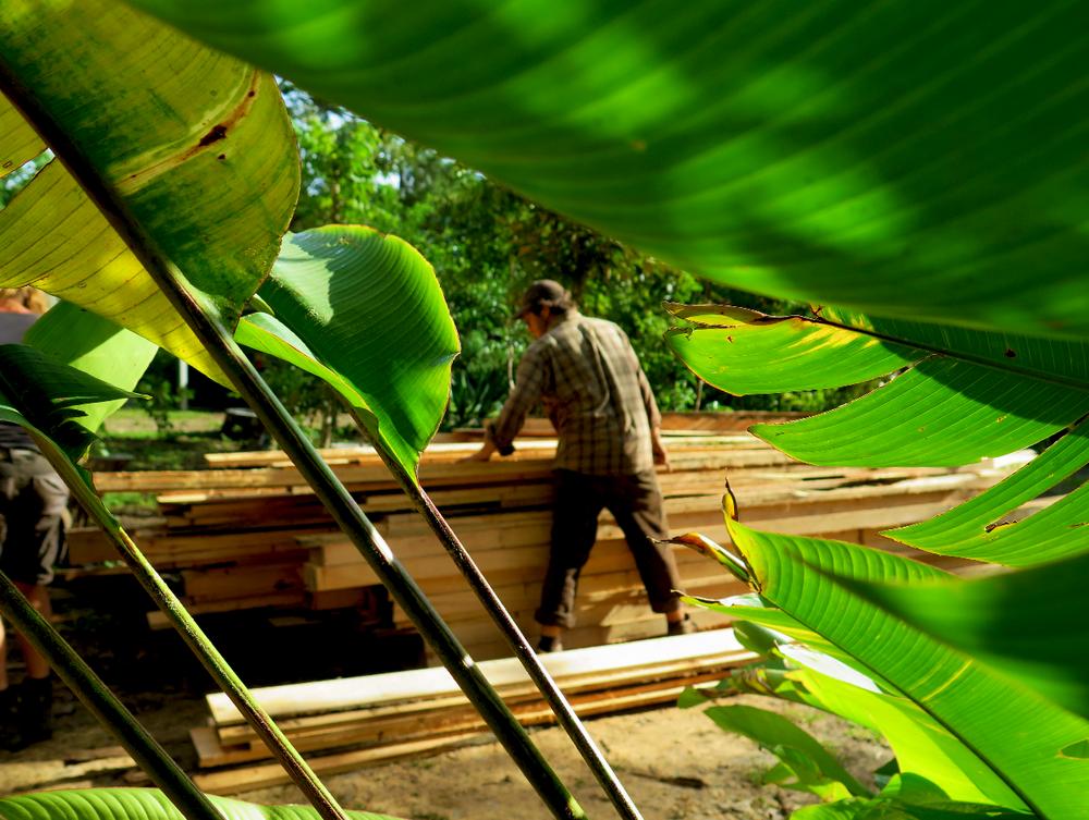 Gero spotted organising a growing lumber pile between beautiful tropical leaves.