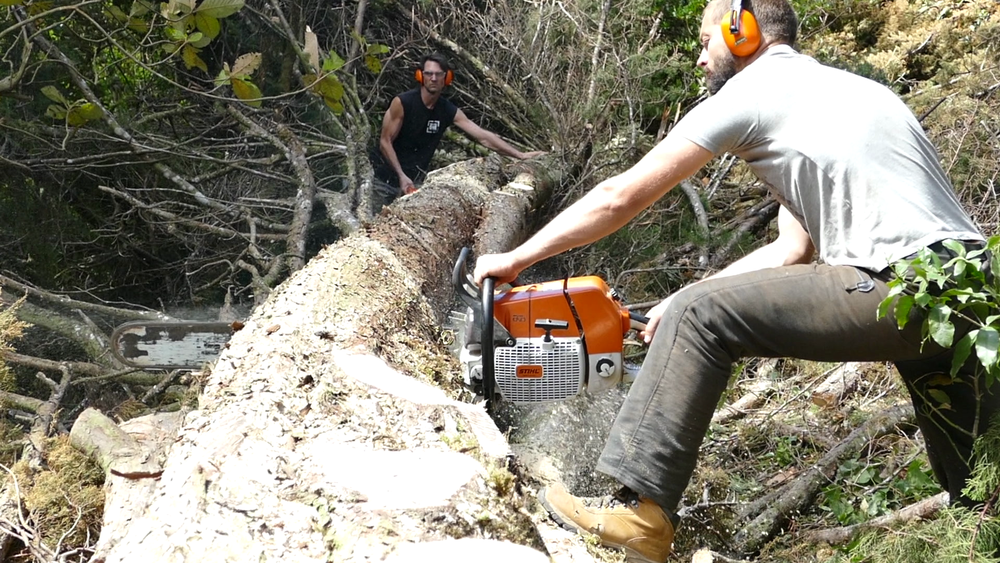 Adrien uses the STIHL chainsaw to cut through a giant felled cypress. Photo: Finn Richardson