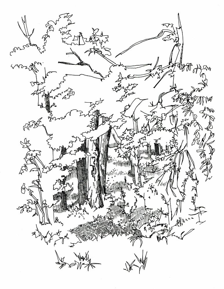 Compart Woods 2017 (773x1000).jpg