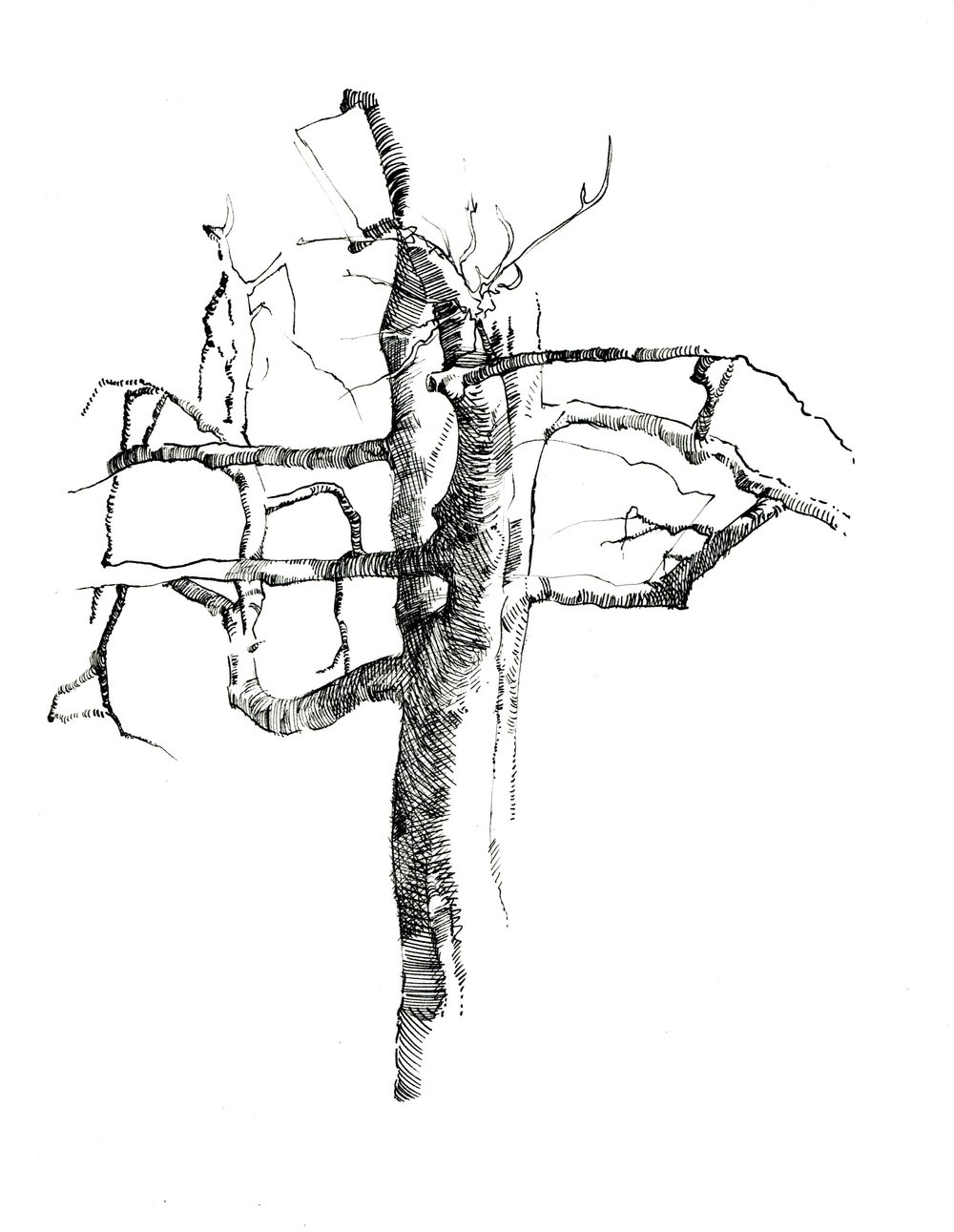 Tree, Riverside.jpg