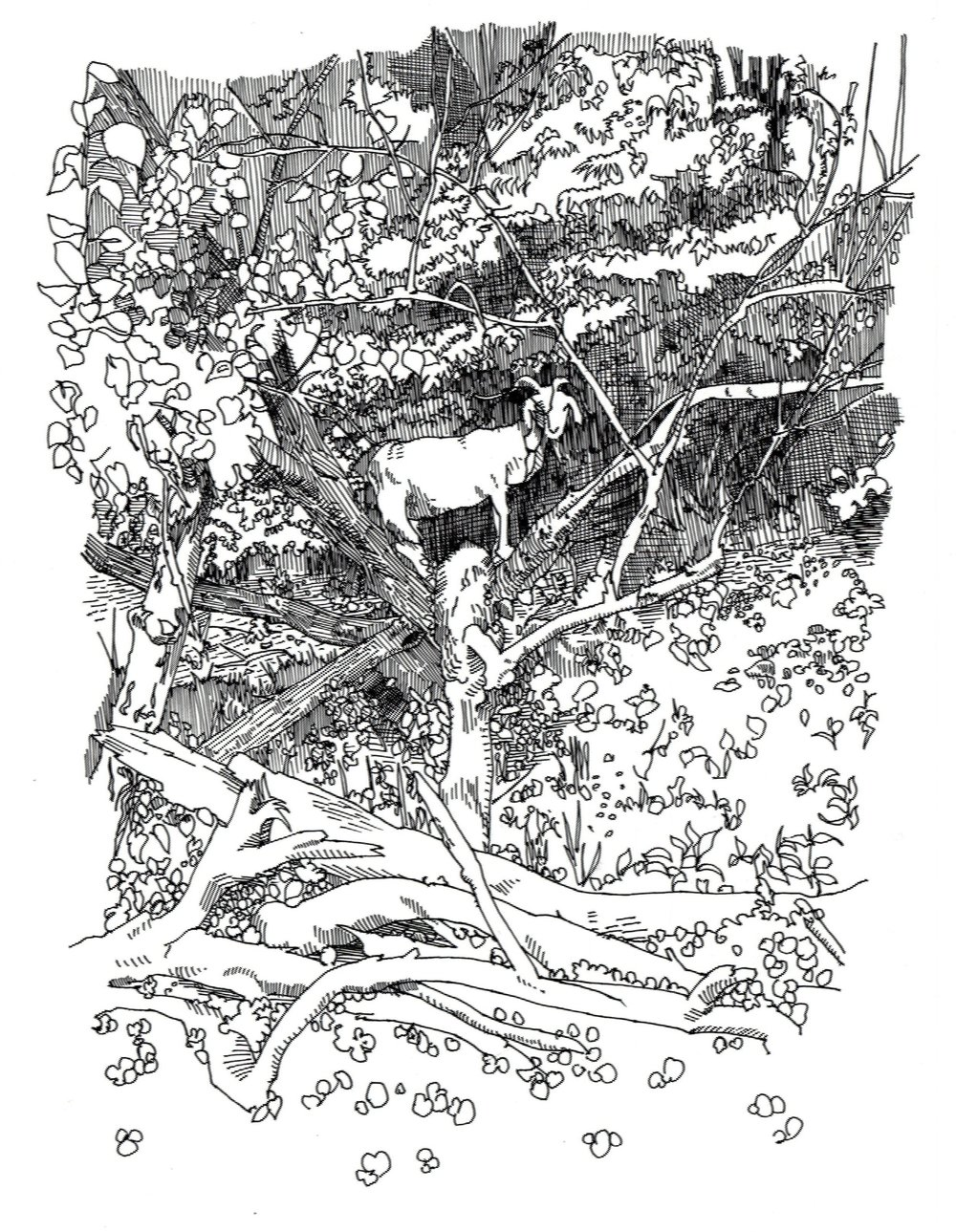 Mysterious Tree Goat.jpg