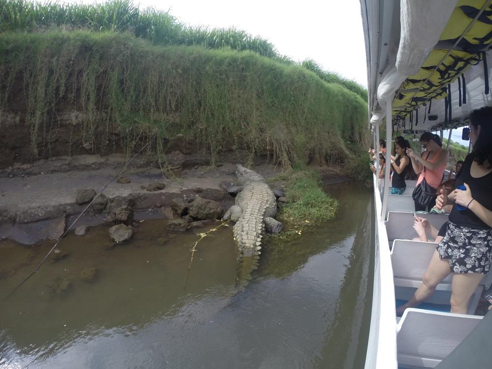 Crocodile Cruise