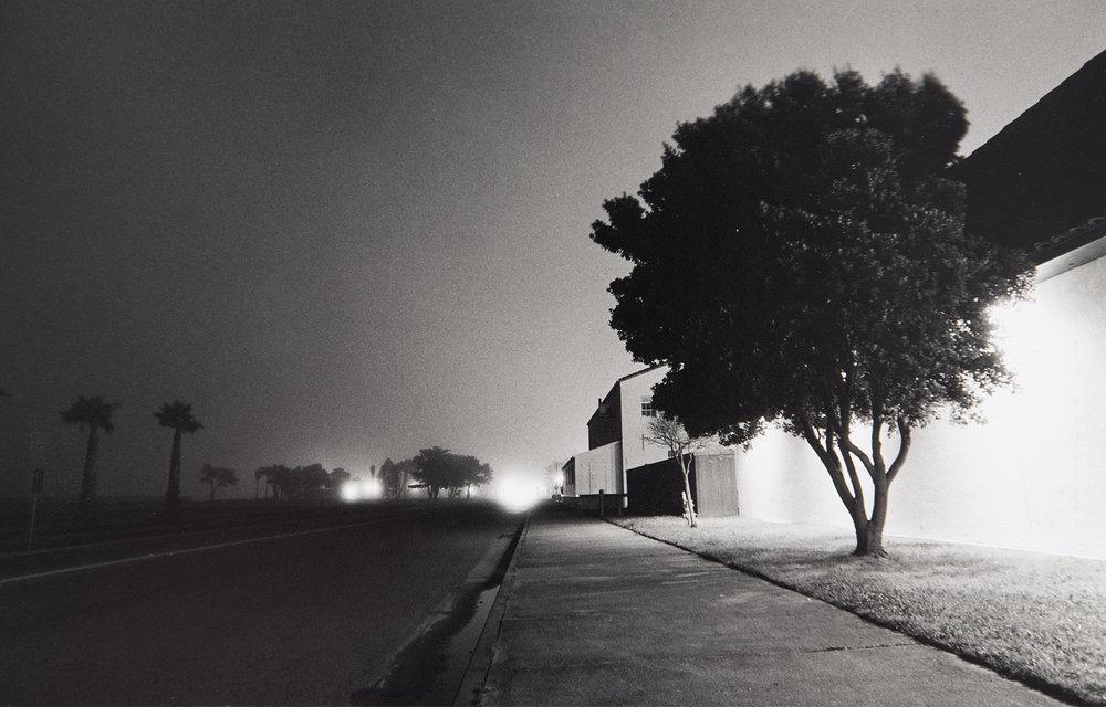 08-SFtrees.jpg