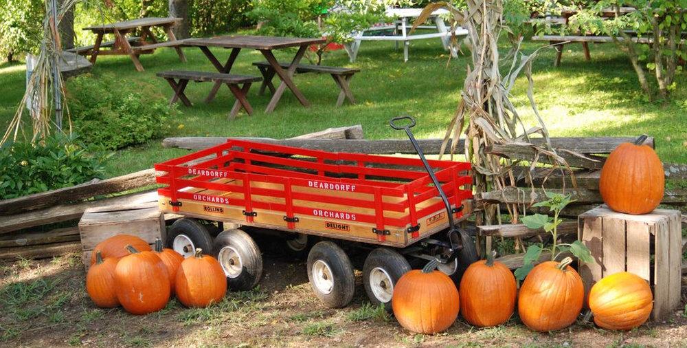 pumpkinscrop.jpg