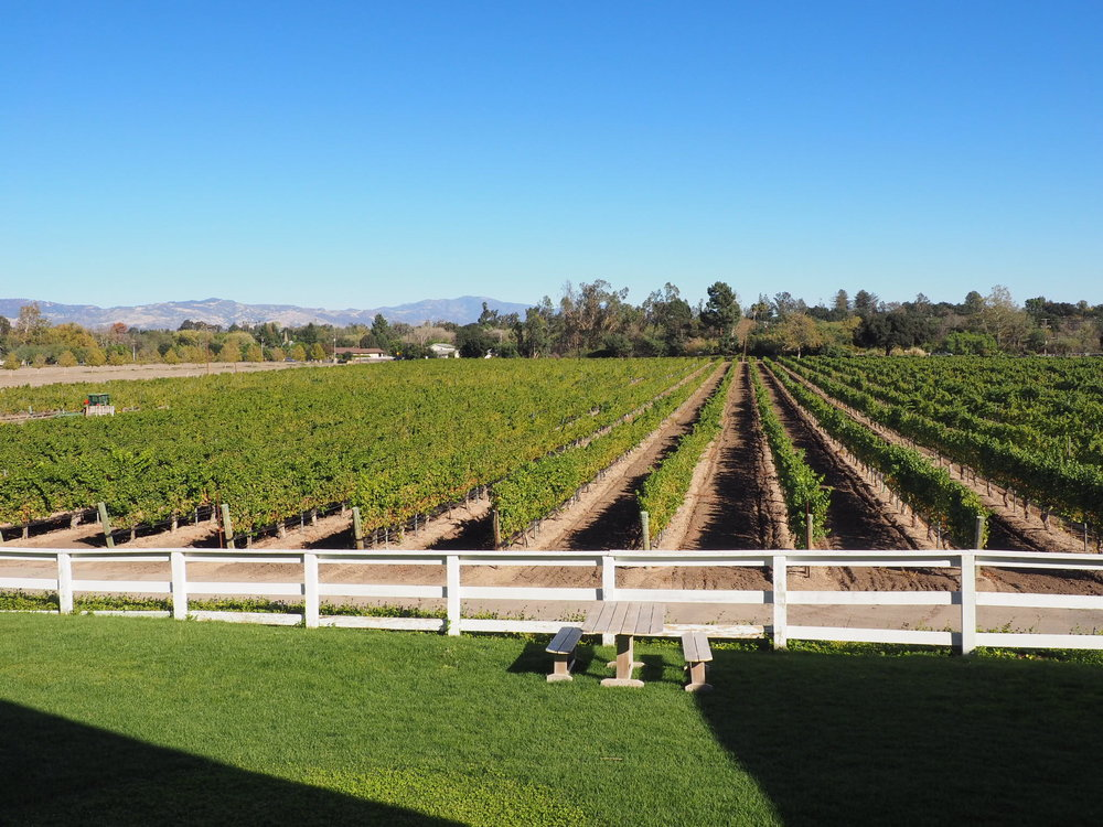 Santa Ynez Wine Country. Photo courtesy of Amy Adams