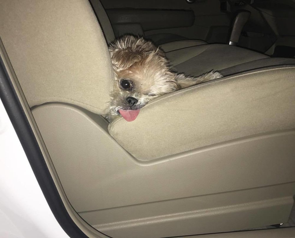 marniethedog :   Tanx 4 the ride