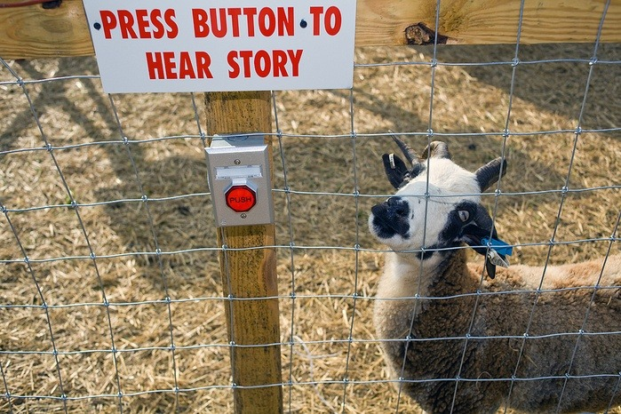 funkybug: what do u have to tell me goat