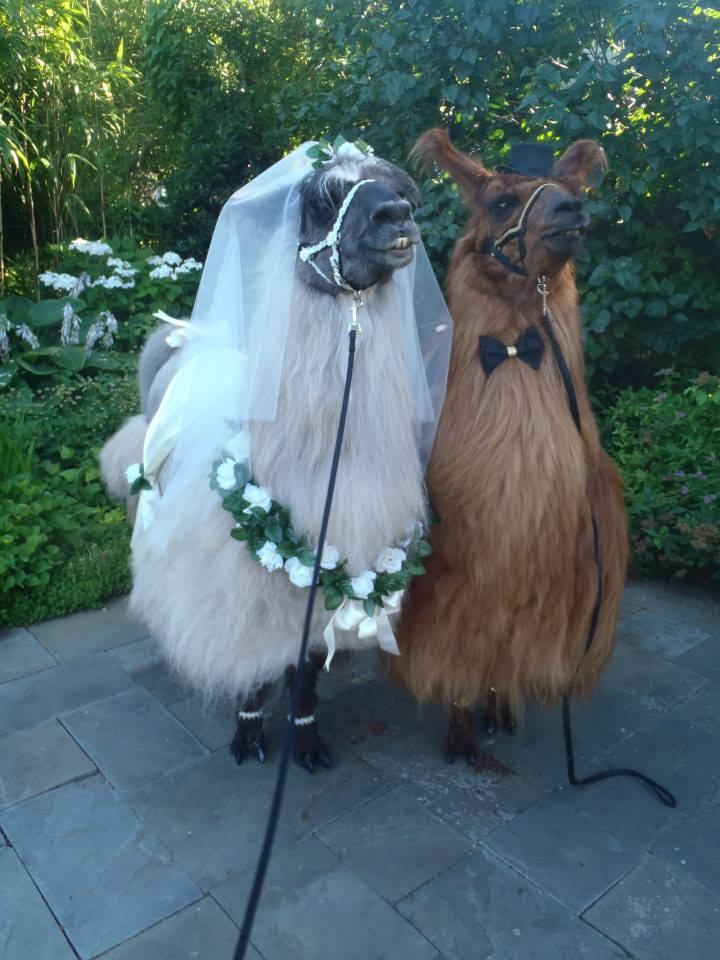 ottermatopoeia :   what a beautiful wedding