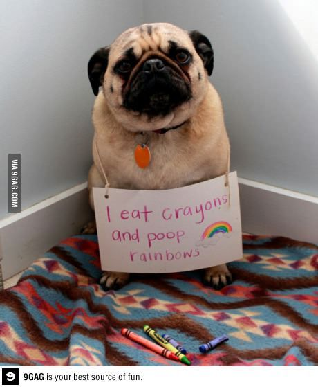 michelleplays: Been crazy about this crayon-eating-rainbow-pooping Pug since 24 hours ago. Damn it is so cute. Alright, time to upload Icomania and 4Pics1Word. =] me, too. me. too.