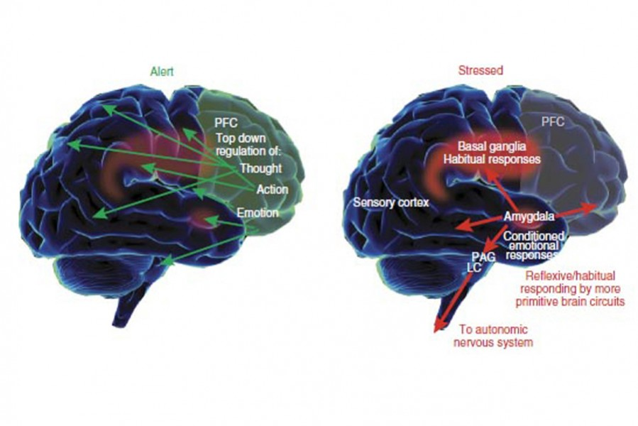 The fight in your brain for resources; the prefrontal cortex (rational part of the brain) in the calm blue head state. And the limbic system (emotional centre of the brain) in red head, the stressed state.  Image borrowed with thanks.