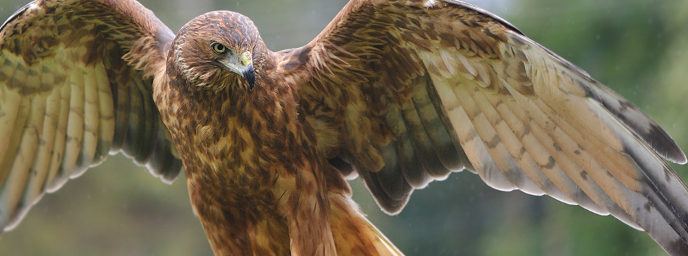 Image:  Wingspan . With thanks cjG.