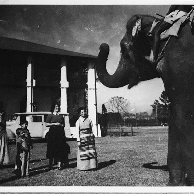 My fathers pet elephant  Tondu tea estate, India