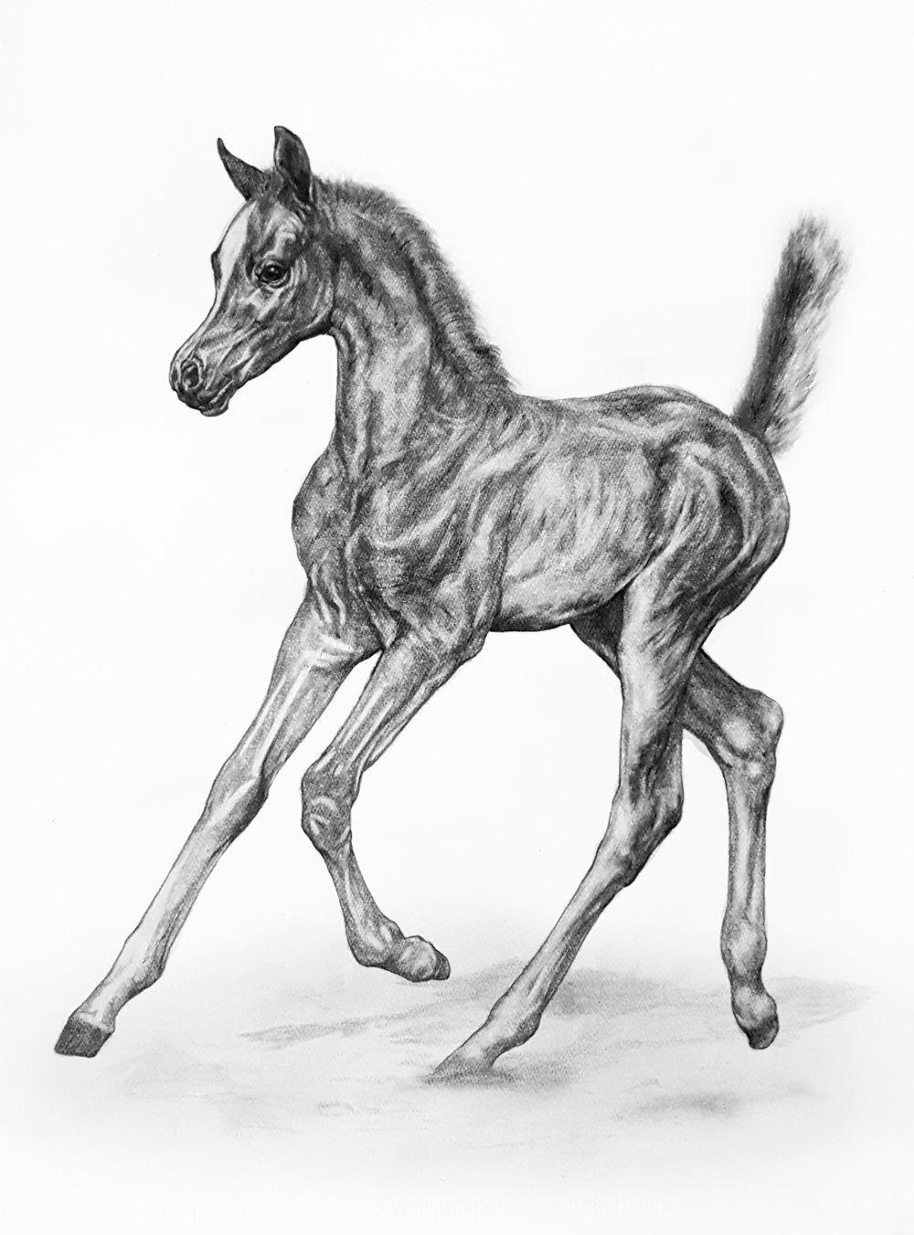 Trotting Arabian Foal. 2018. Graphite on 300 GSM Fabriano Artistico Paper (76 x 56cm) AVAILABLE