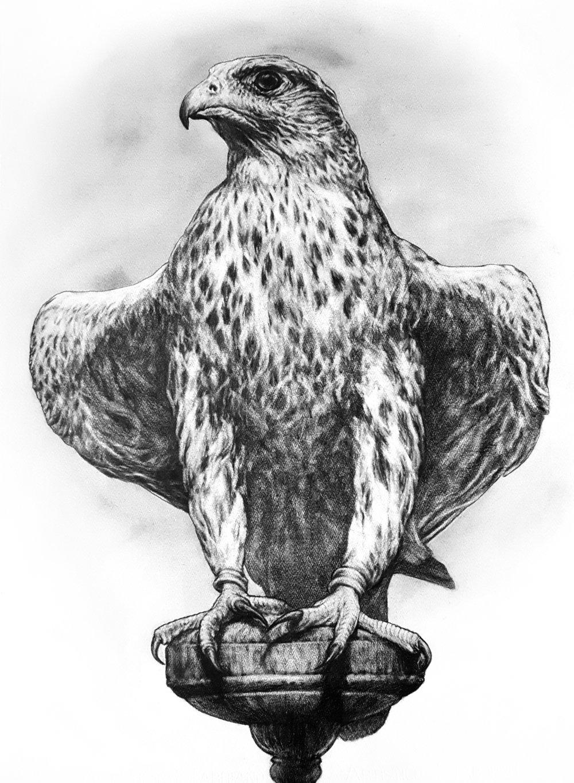 Portrait of a Standing Falcon. 2018. Graphite on 300 GSM Fabriano Artistico Paper (76 x 56cm) SOLD