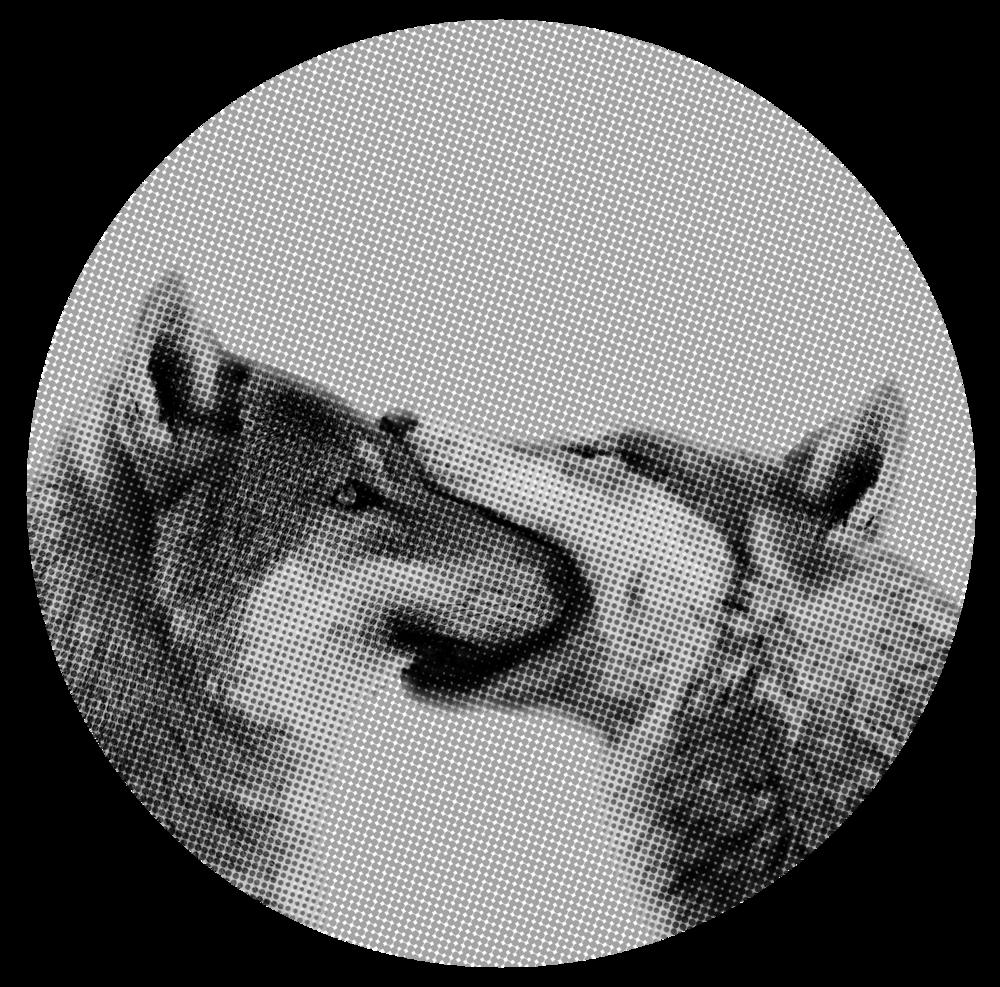 wolflove_neu.png