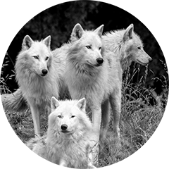 wolfteam_grau_klein.png