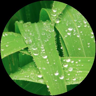foliar.png