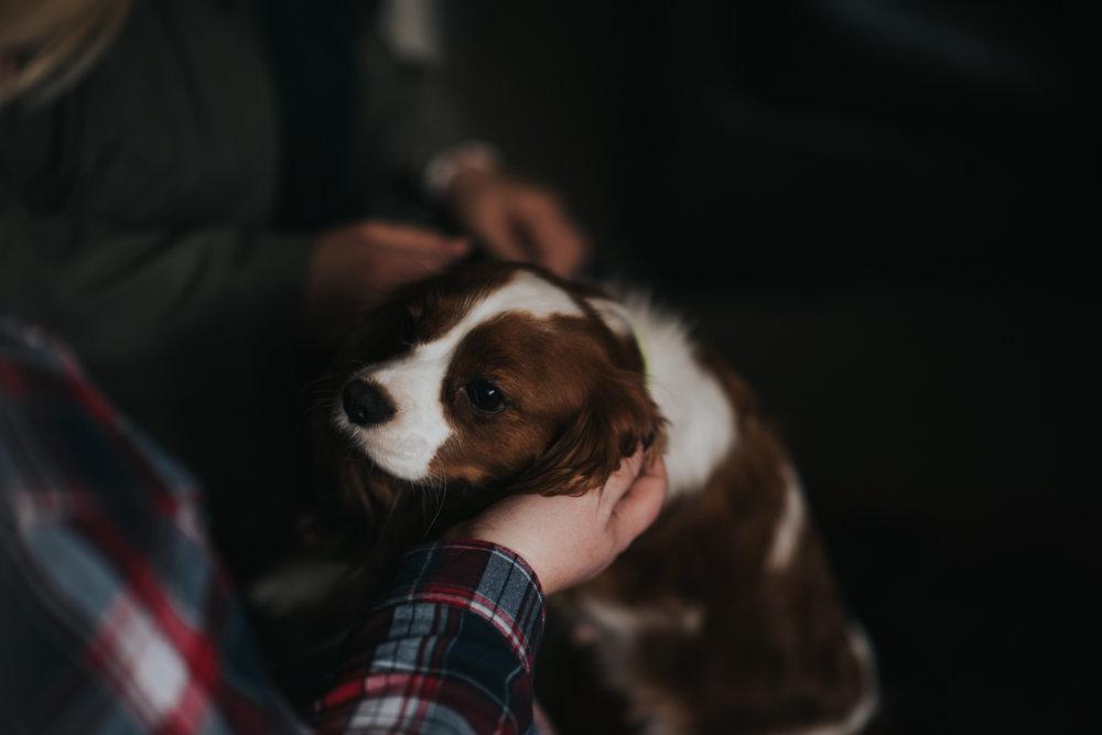 Brisbane Family Photographer | Lifestyle Pet Photography-2.jpg