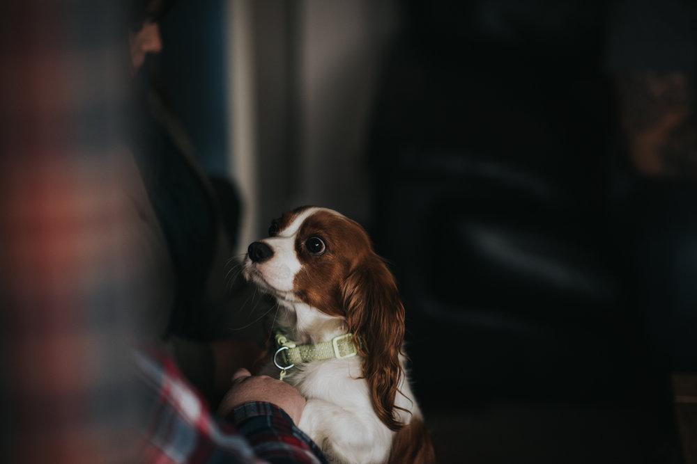 Brisbane Family Photographer | Lifestyle Pet Photography-3.jpg