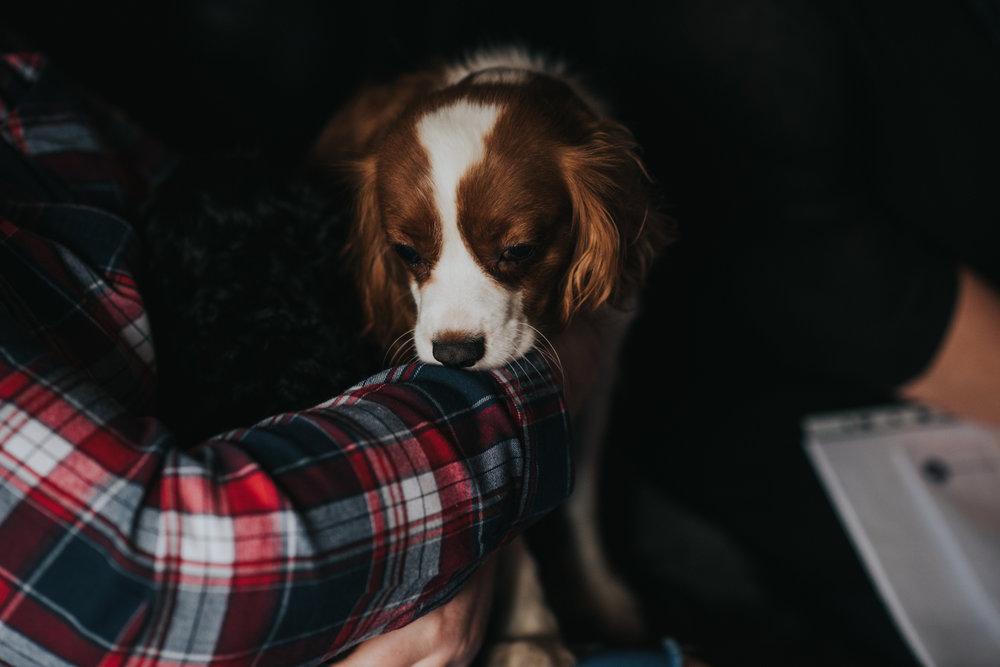 Brisbane Family Photographer | Lifestyle Pet Photography-5.jpg