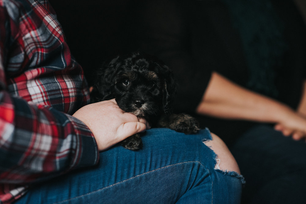 Brisbane Family Photographer | Lifestyle Pet Photography-6.jpg