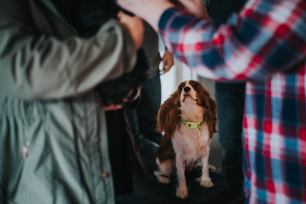 Brisbane Family Photographer | Lifestyle Pet Photography-8.jpg