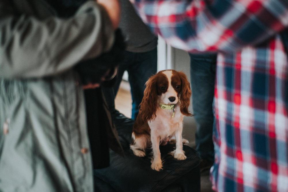 Brisbane Family Photographer | Lifestyle Pet Photography-9.jpg