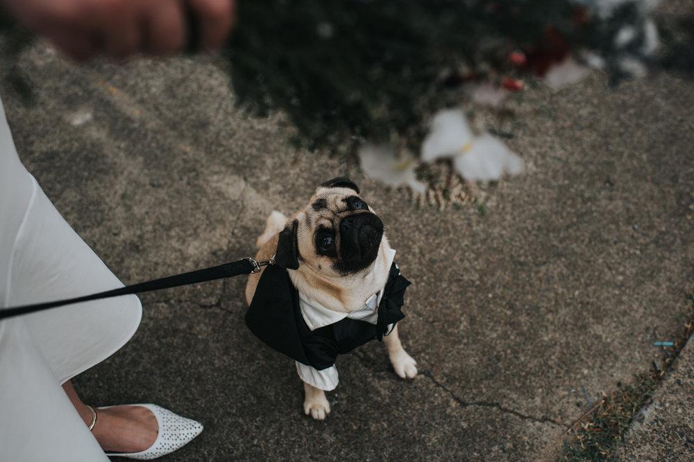 Brisbane Elopement | Wedding Photography-21.jpg