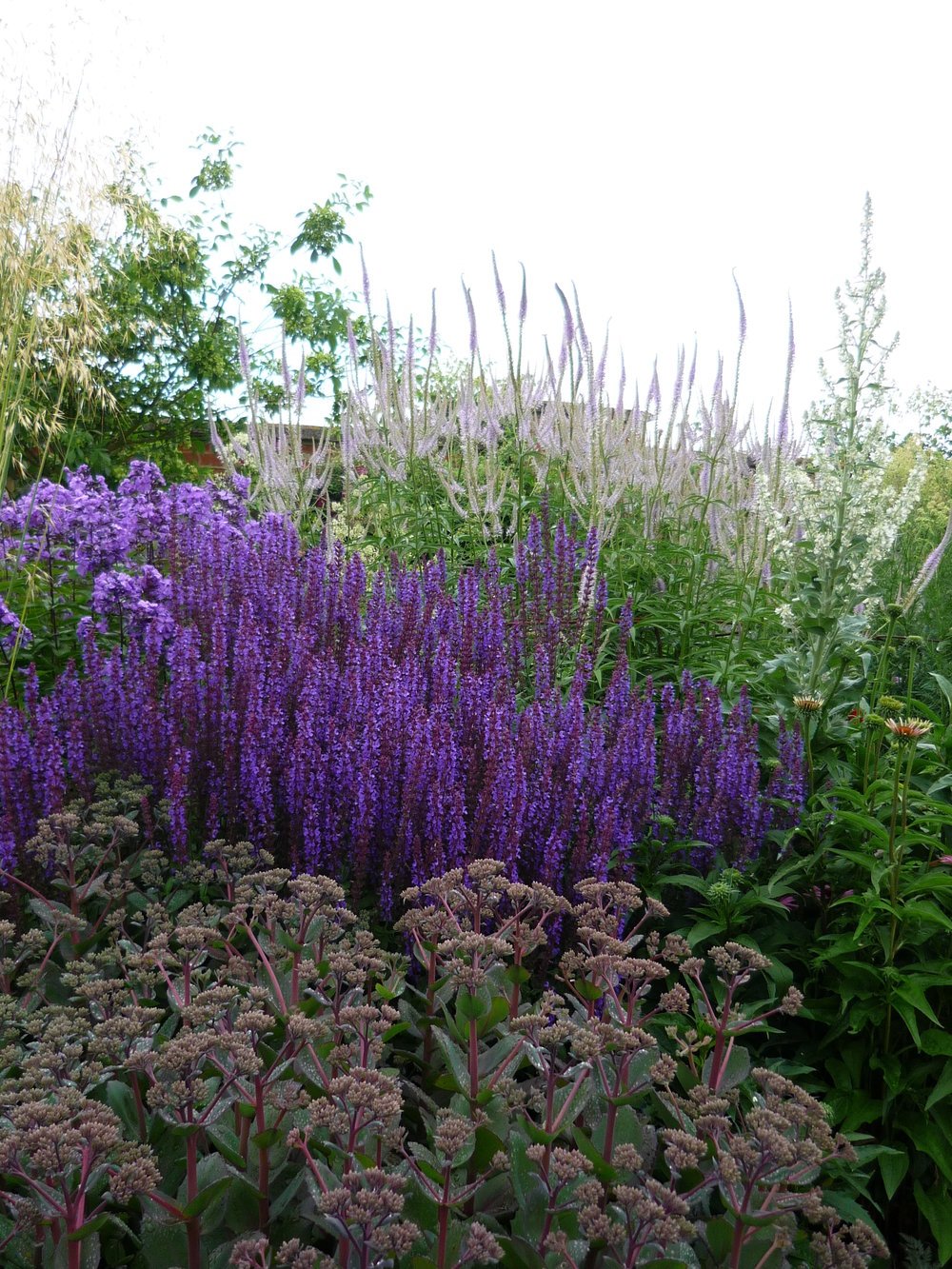 Veronicastrum, Salvia and Sedum