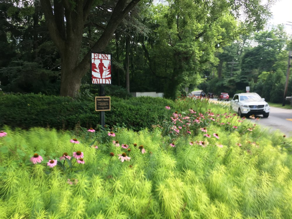 July 2018 - The Bryn Mawr and Old Gulph traffic island exemplifies ecological garden design.