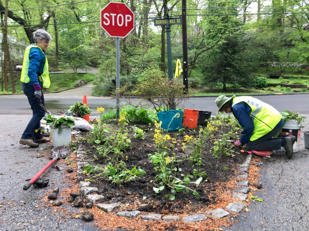 Expert gardeners and tireless PVCA garden volunteers, Ellen Briggs and June Lauer work to add new plantings to our smallest traffic island.