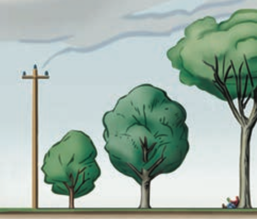 Plant smaller species under power lines so that utility companies will not damage them through trimming or removal. Larger species should be planted at a safe distance from the lines. If species are removed, replant to restore natural beauty and ecological services lost.