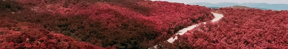 RED-forest-04.jpg