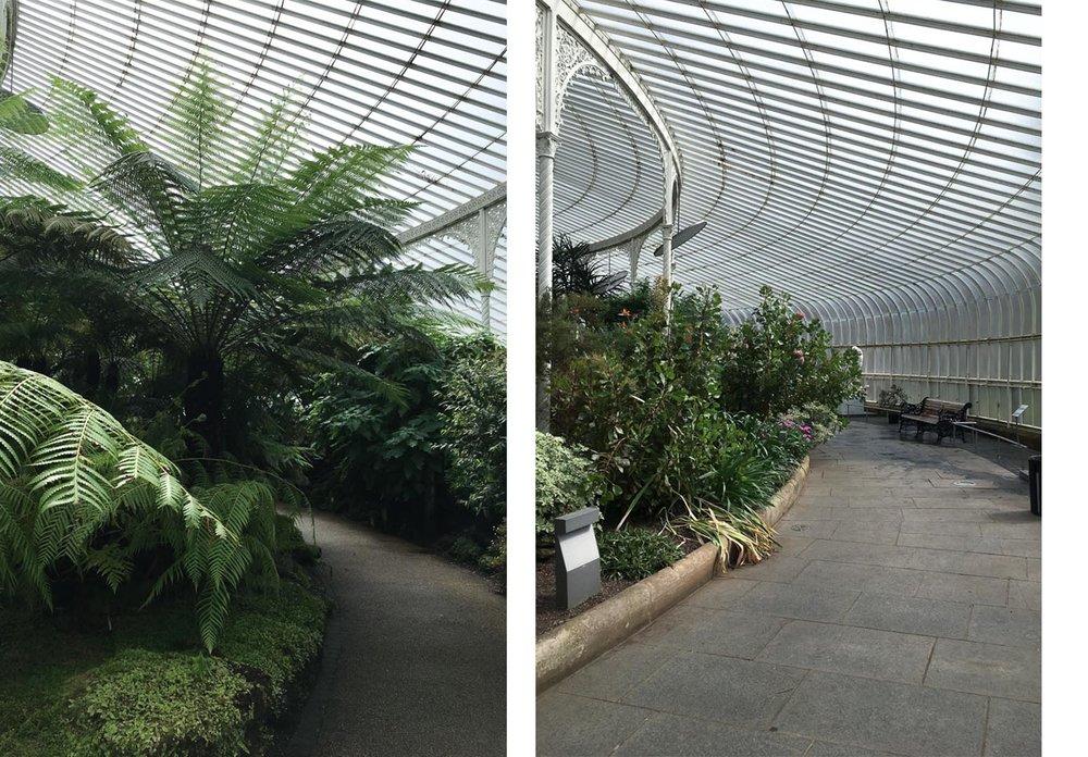 Glasgow-Botanic-Gardens