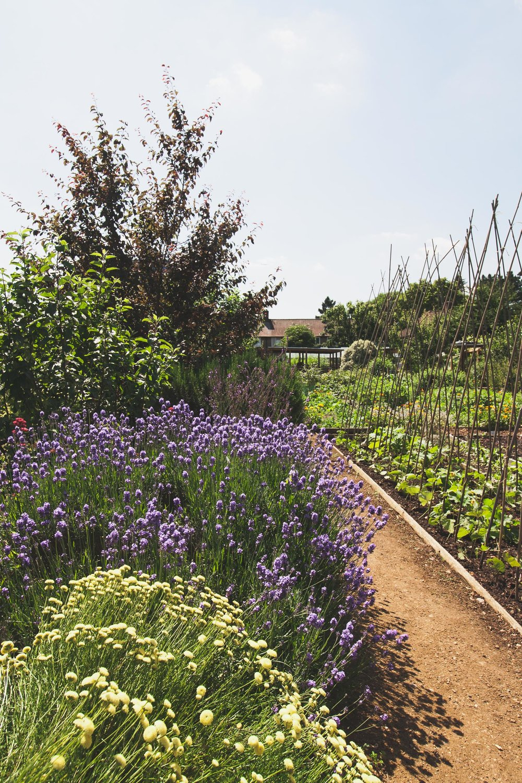 Phoenix_Gardens