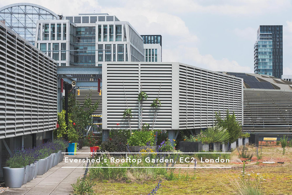 Eversheds_Rooftop_Garden