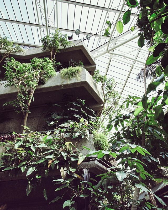 We love how the plants have grown around the brutalist architecture at the Barbican 👍🏻✔️🌿