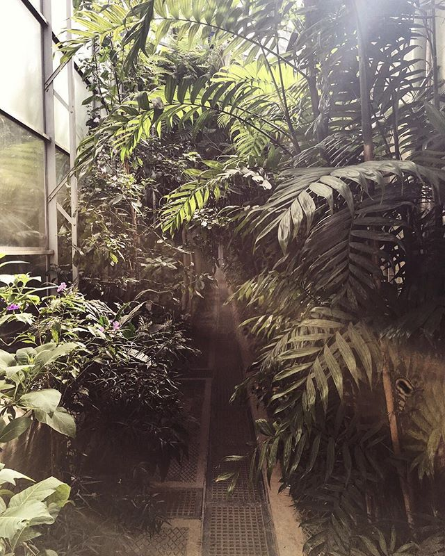 Nothing better than that hazy light when exploring glasshouses 🌿✨🙌🏻 -