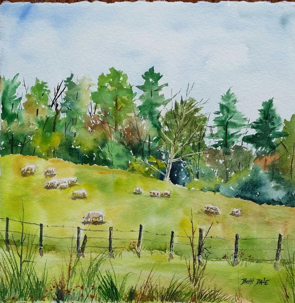Sheep at Pasture
