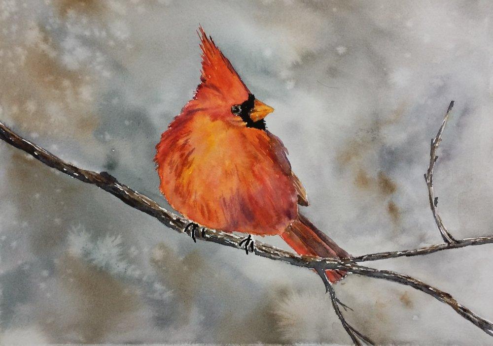 Cardinal on Limb