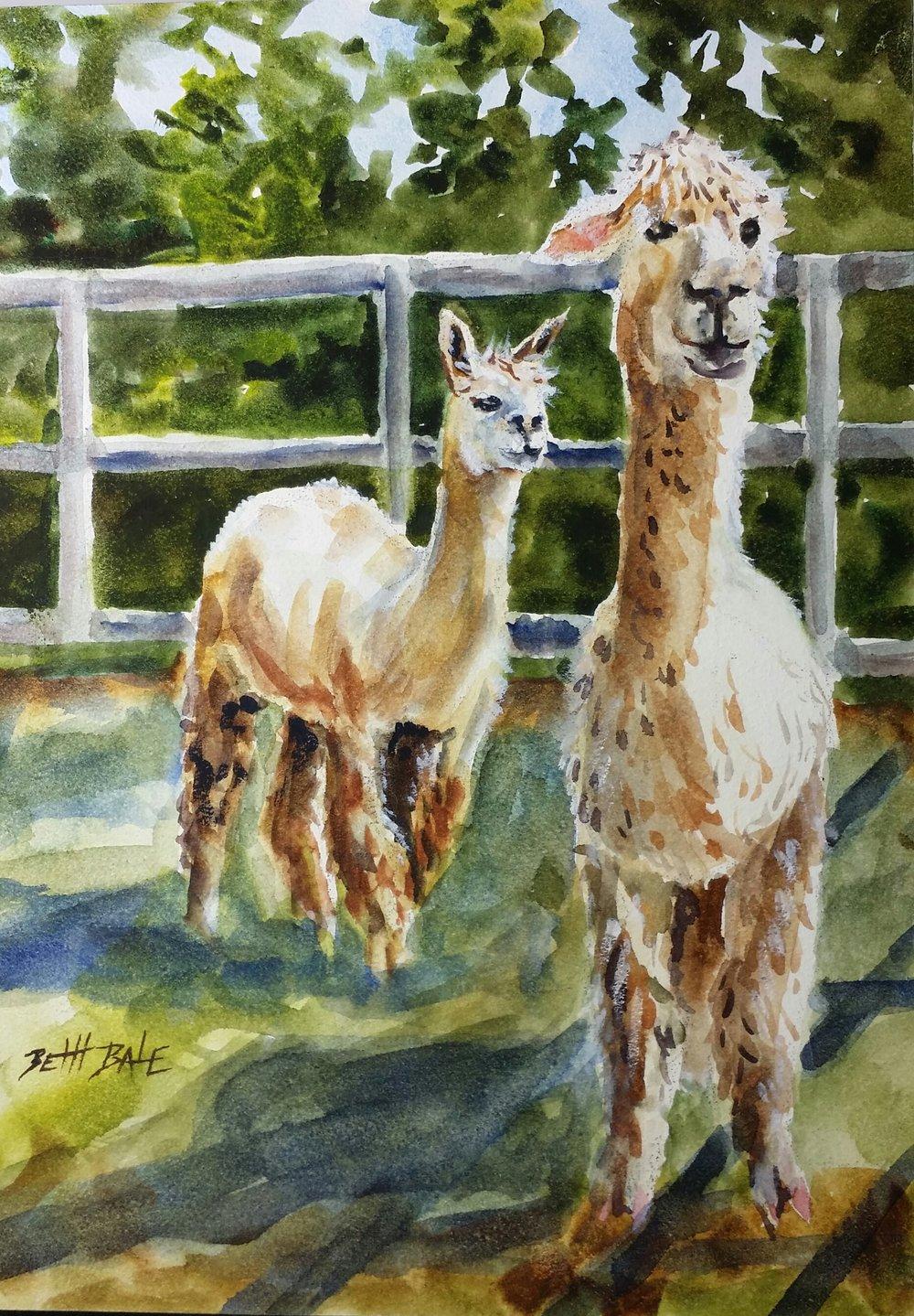 Two Alpacas