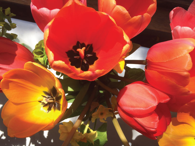 Tulips-web.jpg