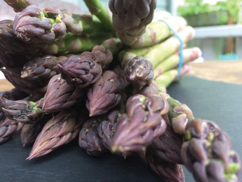 Asparagus1-web.jpg
