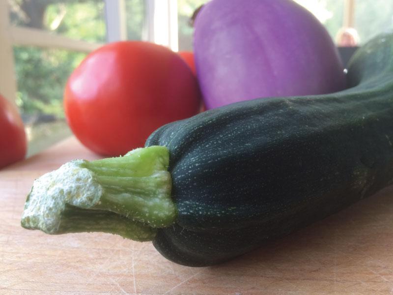 Zucchini-eggplant-tomato-web.jpg