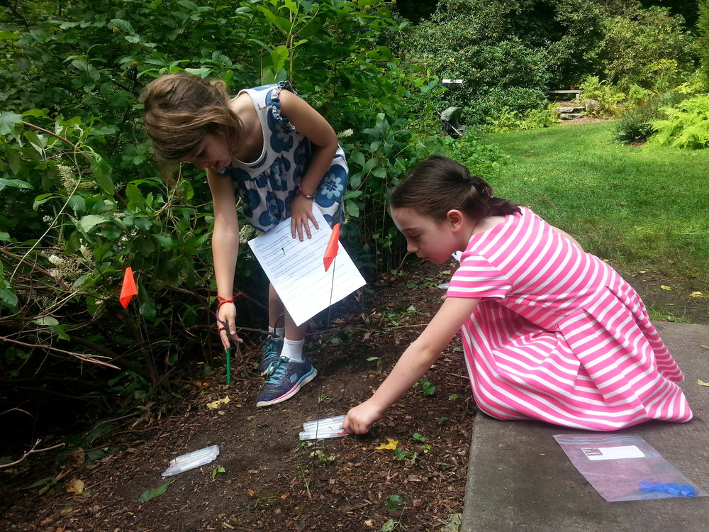 WonderLab Summer Camp participants engaging in Professor Mertl's Citizen Science Ant Survey.