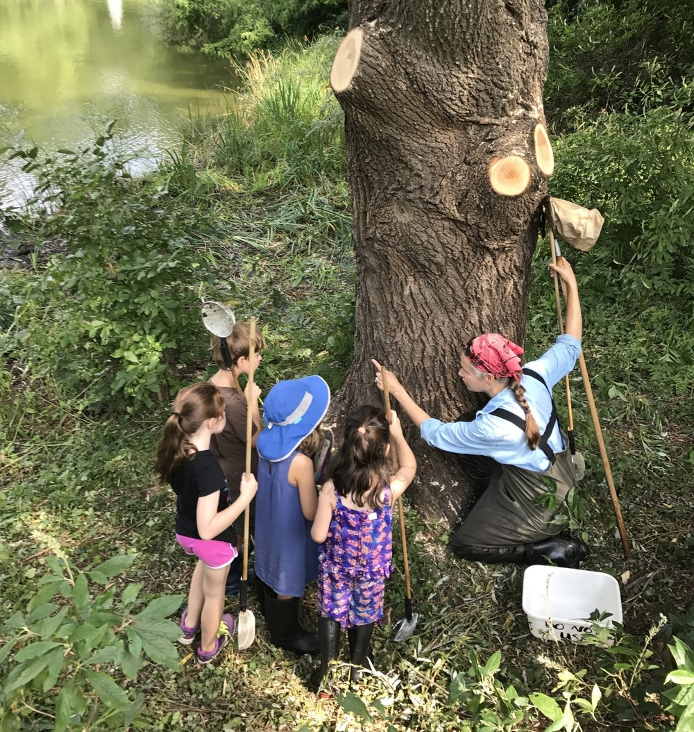 2017 Animal Antics exploring cicada exuviae on the at Halcyon Pond with a Mount Auburn researcher.