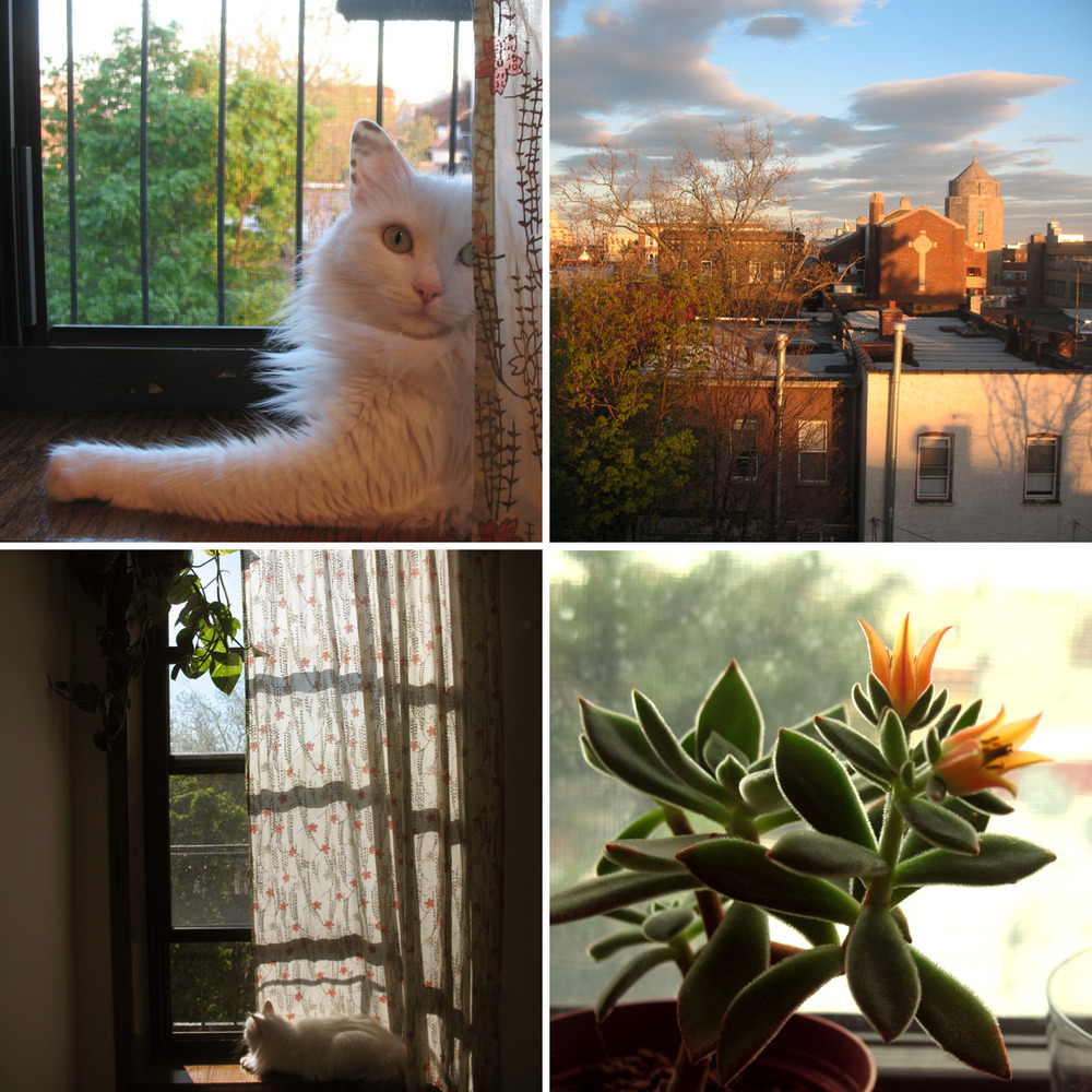 Haven't been making art because I am writing my literature thesis, so here are pictures of the homefront instead.  Cat, Most Precious Blood church, surprise flowers on a plant (as soon as it started blooming the leaves started shriveling up and falling off, so…whoops), cat again.