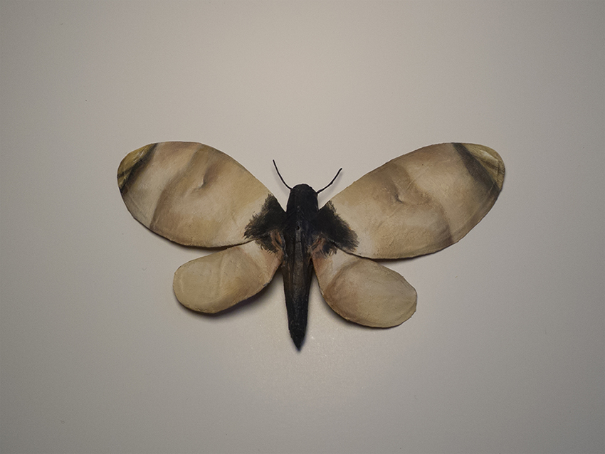 Moth No. 3 / Courbet