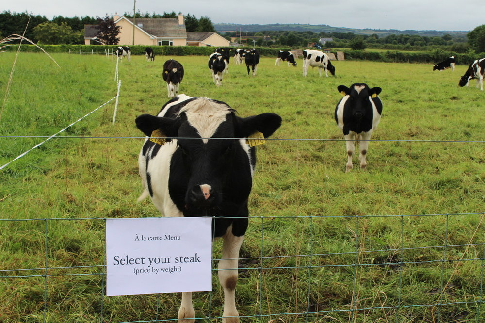 """Livestock"" messages, Countryside of Ireland, late 2012"