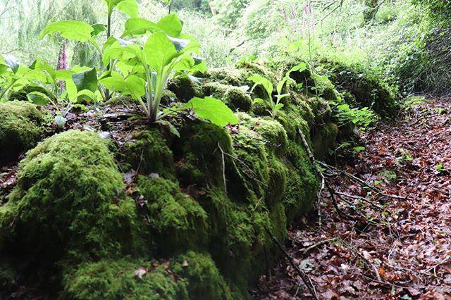 Lands of legends 🌿✨ Mysterious & magic Brittany 🕊  Terres de légendes🍃 Mystérieuse et envoûtante Bretagne 🌿💕 #brittany#nofilter#forest#celticlegends#green#life#vegetation#plants#nature#landscape#wanderlust#wonderland#fairytail#france#travelblogger#travel#lifestyle#slowlife#yishaiwithlove#mindfulness#hike#ride @chateau_du_launay 🕊@bretagnetourisme 🌿@morbihantourism ✨